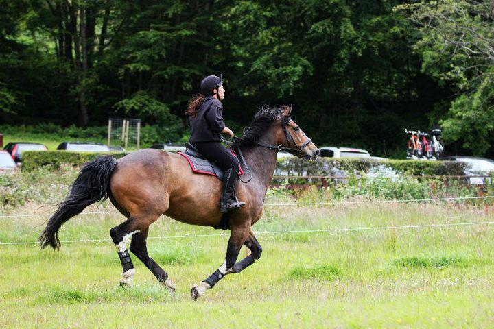 Kelburn horse Riding