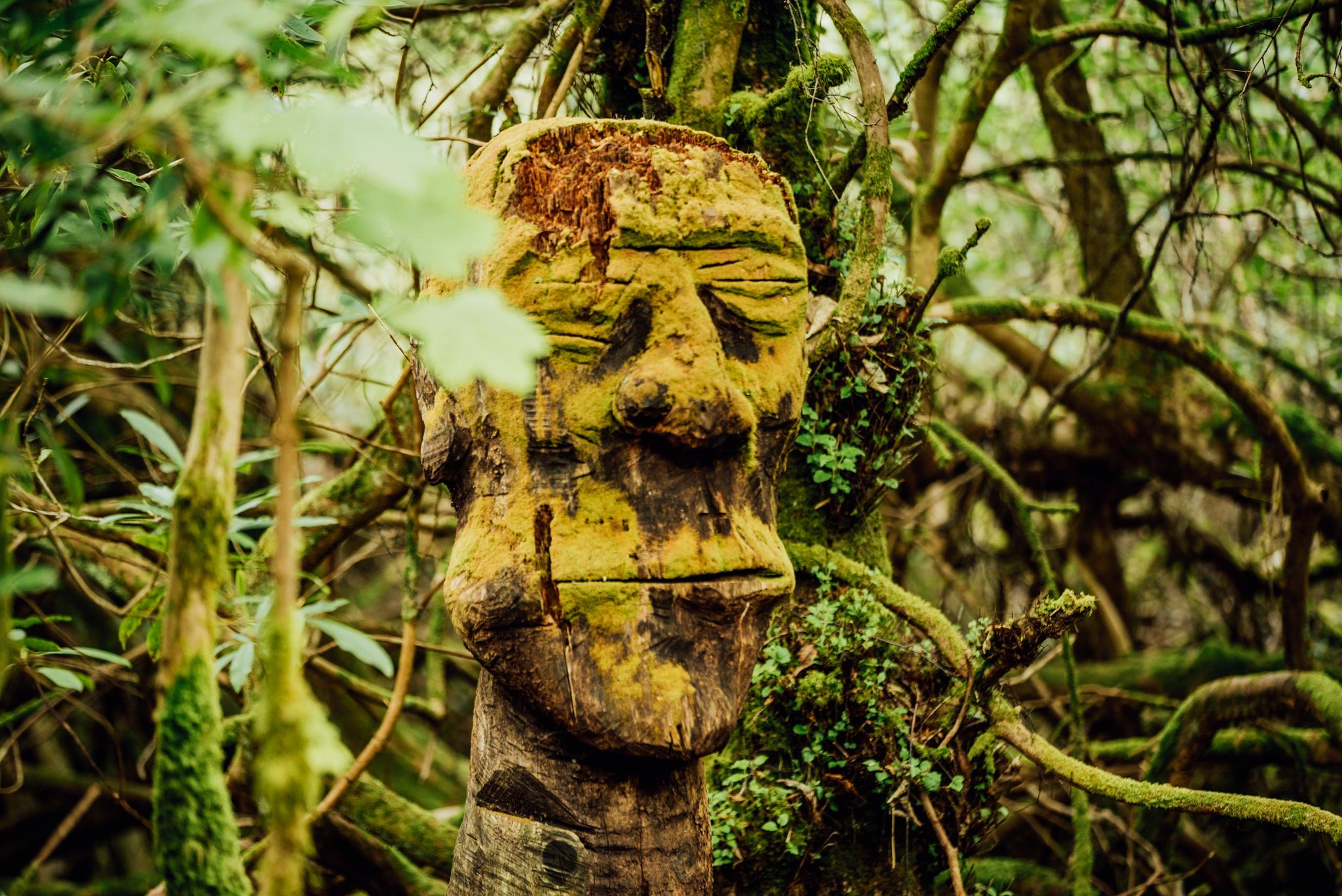 Inner Woods