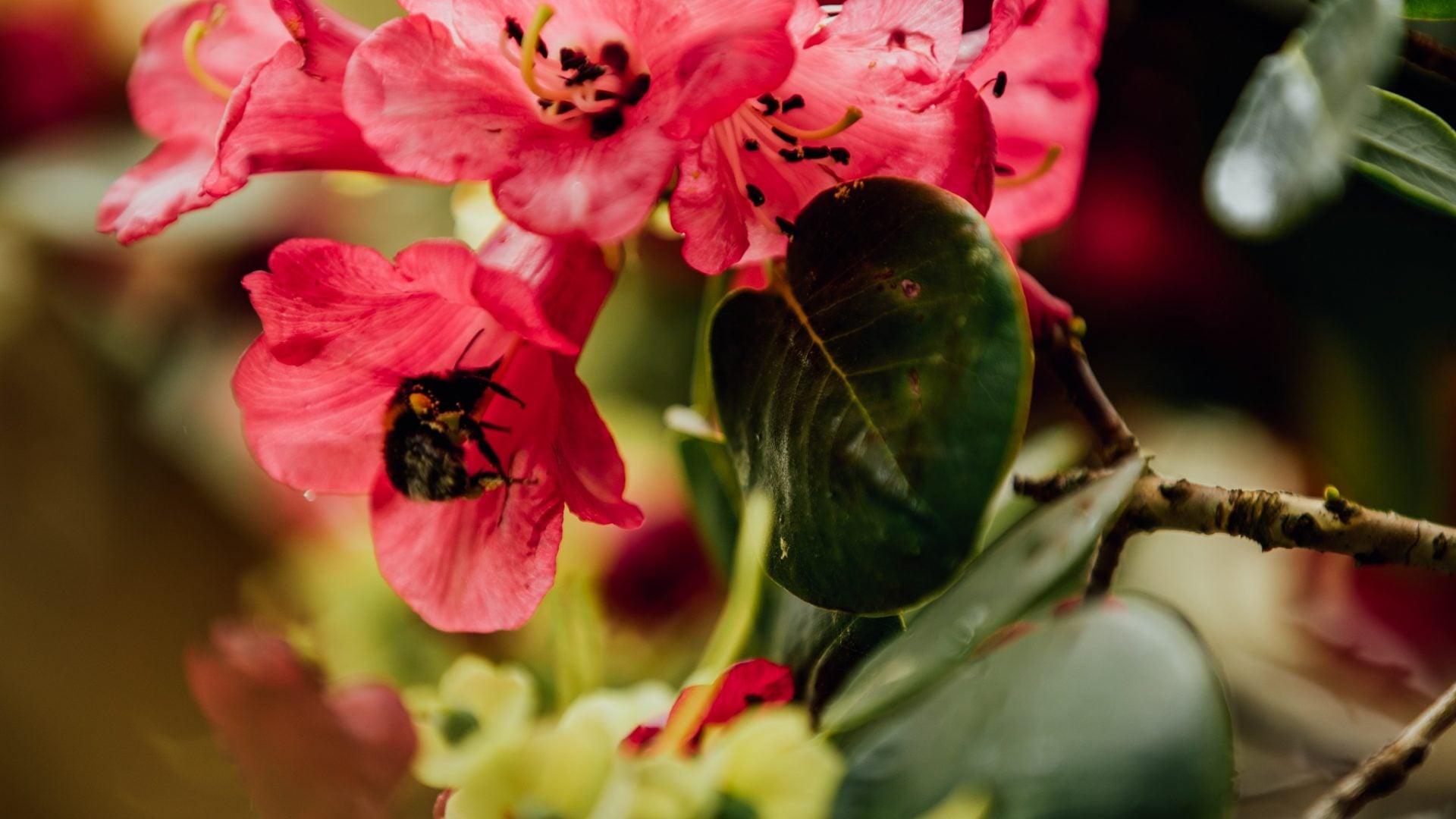 Seasons in Kelburn Gardens