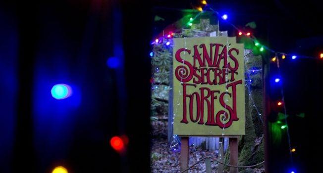 Kelburn's Christmas Forest: December